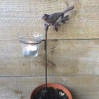 Bird on a Branch Tea Light Holder