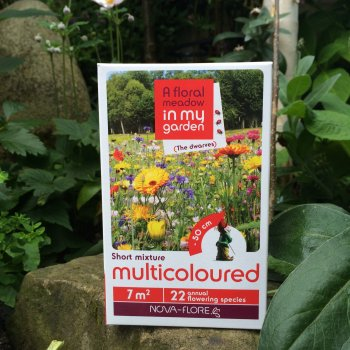 Flower Seeds for Multi-Coloured Garden Flowers