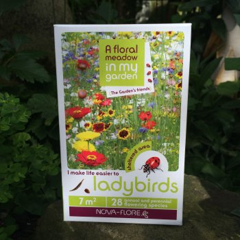 Flower Seeds to Encourage Ladybirds into the Garden