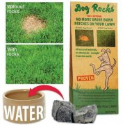 "Laboratory Tested ""Dog Rocks"""