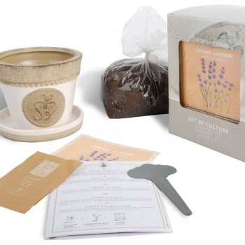 Lavender Growing Kit in a Gift Box