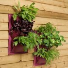 Pack of 2 Verti Plants - Aubergine