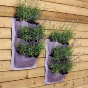Pack of 2 Verti Plants - Lavender