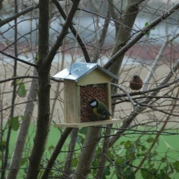 Pine Wood Mesh Peanut Feeder for Birds