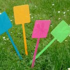 Plastic Fly Swatter in a Choice of 4 Colours