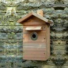 Premium Wildlife Camera Nestbox