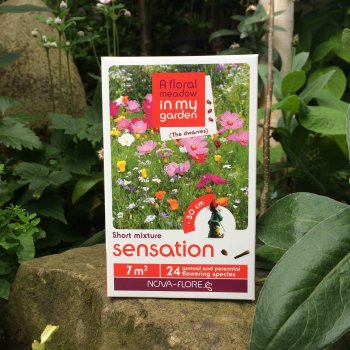 """Sensation"" - A Mix of Dwarf Flower Seeds"